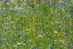 Färgrik sommaräng med lösa blommor royaltyfri foto
