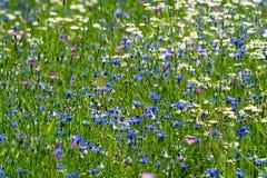 Färgrik sommaräng med lösa blommor arkivbild