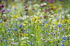 Färgrik sommaräng med lösa blommor arkivbilder