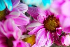 Färgrik sommar blommar bukettuppsättningen för ett specialt livögonblick royaltyfri fotografi