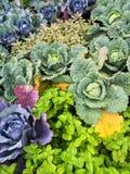 Färgrik sommargrönsakträdgård Royaltyfria Foton