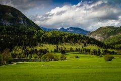 Färgrik sommarmorgon på Bohinj sjön i den Triglav nationalparken Slovenien, Julian Alps, Europa Royaltyfri Fotografi