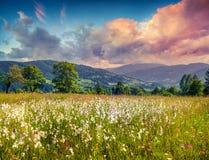 Färgrik sommarsoluppgång i bergen med fjädergräs Arkivbild