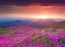 Färgrik sommarsoluppgång i Carpathian berg Arkivfoton