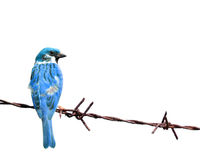 Färgrik Sparrow royaltyfria foton