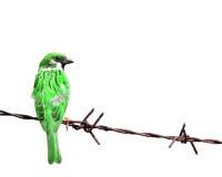 Färgrik Sparrow arkivfoto