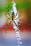 färgrik spindel arkivbild