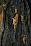 Färgrik stenbakgrund för selektiv fokus Arkivbild