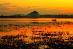 färgrik swamp Royaltyfria Bilder