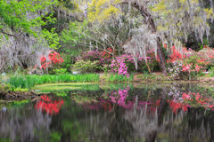 Färgrik sydlig trädgård i blom Royaltyfria Foton