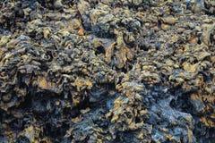 Färgrik texturerad vägg av svarta Lava Rock Fotografering för Bildbyråer