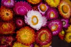 Färgrik torkad blomma arkivbilder