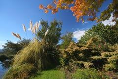 Färgrik trädgård arkivbild