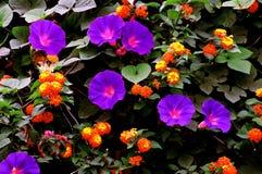 färgrik trädgård arkivbilder