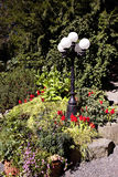 färgrik trädgård Royaltyfri Fotografi