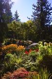färgrik trädgård Arkivfoto