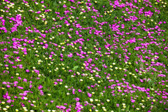 färgrik trädgård Royaltyfri Bild