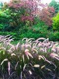 Färgrik trädgård med dekorativt gräs Fotografering för Bildbyråer