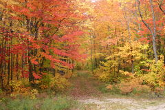 färgrik trail Arkivfoto
