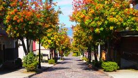 färgrik tree arkivfoton