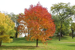 färgrik tree för höst Arkivbild