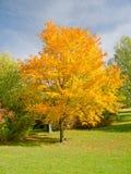 Färgrik tree i fall Royaltyfria Foton