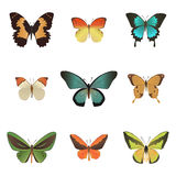 Färgrik tropisk fjärilssamling Arkivbilder