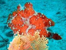 Färgrik tropisk rev Arkivbilder