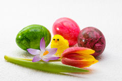 Färgrik tulpan och en fågelunge Arkivfoto