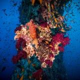 Färgrik undervattens- rev med korall och svampar royaltyfri fotografi