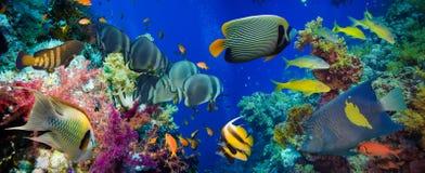 Färgrik undervattens- rev med korall och svampar arkivfoton