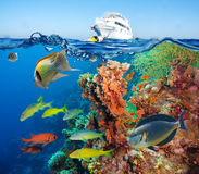Färgrik undervattens- rev med korall och svampar royaltyfri foto