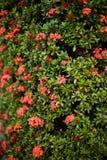 Färgrik vägg med blommasidor Arkivfoton