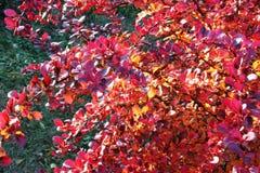 Färgrik växt Arkivfoto