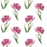 Färgrik vår för vattenfärg och sömlös modell för sommarblommor med rosa tulpan royaltyfri fotografi