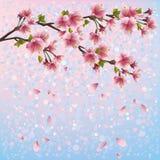 Färgrik vårbakgrund med den sakura blomningen - J Arkivfoton