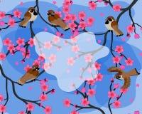 Färgrik vårbakgrund med sparvar som sitter på sakura filialvektor stock illustrationer