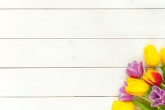 Färgrik vårtulpanbakgrund Arkivfoto