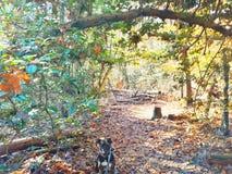 Färgrik vandring som medföljs av den trogna Plott hunden arkivfoto
