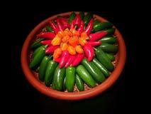 Färgrik variation för Chile peppar royaltyfri bild