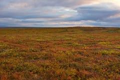 Färgrik vegetation för polar tundra arkivbild