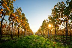 Färgrik vingård på en solig dag Arkivbild