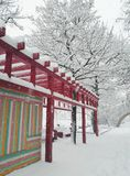 färgrik vinter Royaltyfria Bilder
