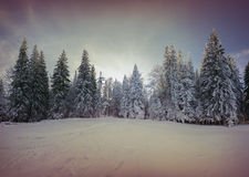 Färgrik vintermorgon i bergskogen Royaltyfria Bilder