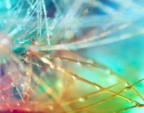 färgrik wallpaper för kaktus Royaltyfria Bilder
