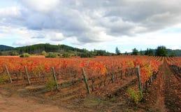 Färgrik wineyard i Chile Arkivfoton
