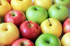 Färgrika äpplen Arkivbild