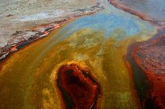 Färgrika alger Arkivbild