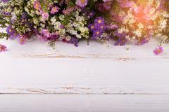 Färgrika asterblommor Arkivfoton