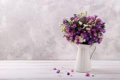 Färgrika asterblommor Royaltyfria Bilder